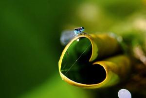heart-bug